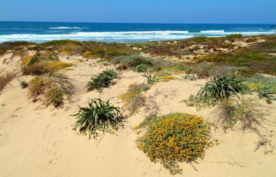 Vegetazione costiera di Baia delle Mimose