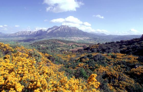 I monti di Oliena visti dall'Ortobene