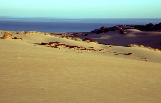 Arbus, le dune della spiaggia di Piscinas