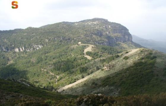 foresta montarbu