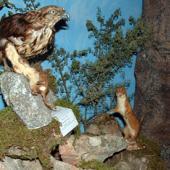 Nughedu Santa Vittoria, museo naturalistico