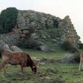 Tempio Pausania, nuraghe Izzana