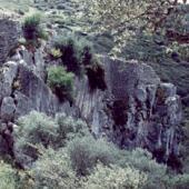 Samugheo, castello di Medusa