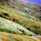 Parco del Gennargentu, impressioni d'autunno