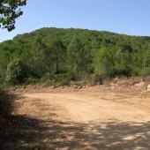 Monti, foresta di Monte Olia