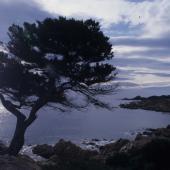Siniscola, la scogliera di Capo Comino