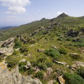Asinara, Punta Scomunica