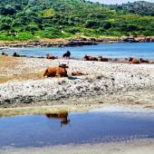Domus de Maria, la spiaggia di Piscinnì